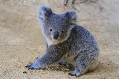 東山動物園 3月末から4月中旬までをまとめて!!