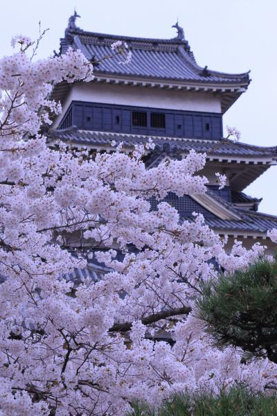 長野 桜めぐり~松本城、上田城跡