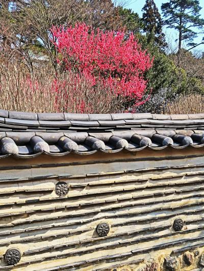 熱海梅園-3 韓国庭園を訪ねて ☆日韓首脳会談/熱海開催の記念で