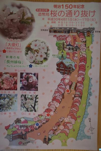 大阪 造幣局桜の通り抜け&ANAクラウンプラザホテル大阪