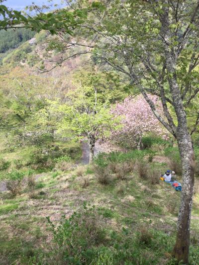 新緑もいいね!吉野山