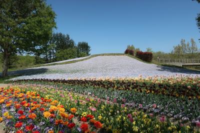 香川県にもチューリップ畑があるんだよ  国営讃岐まんのう公園