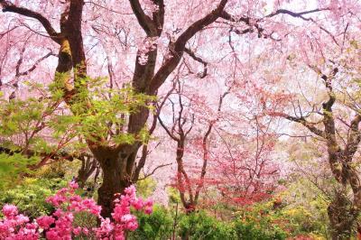 京都・お花見&カフェめぐりの旅1日目