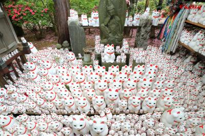 猫★猫★猫がカワイイ!招き猫まみれの豪徳寺