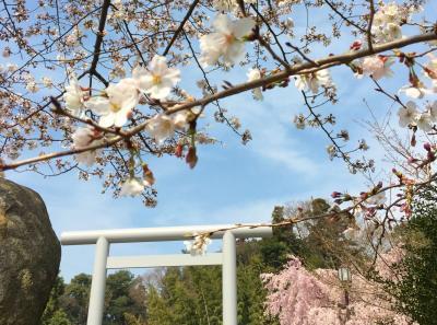 ☆御朱印散歩☆桜が咲いたら櫻木神社へ ついでにキッコーマンもの知りしょうゆ館も