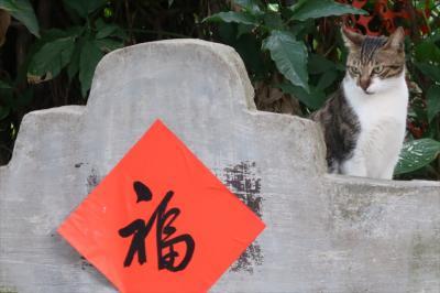 香港★引っ越し前に 沙田ご近所村さんぽ2 ~牛皮沙村Ngau Pei Sha Village~