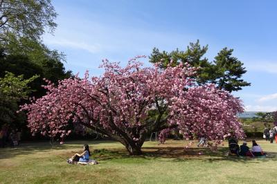 新宿御苑 八重桜めぐり
