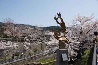 岡崎から琵琶湖疎水の桜見物