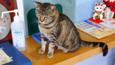 福岡の猫パラダイス島である『相島』に3度目の訪問【猫を探しに相島散策前編】