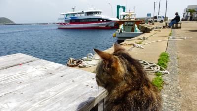 福岡の猫パラダイス島である『相島』に3度目の訪問【猫を探しに相島散策後編】