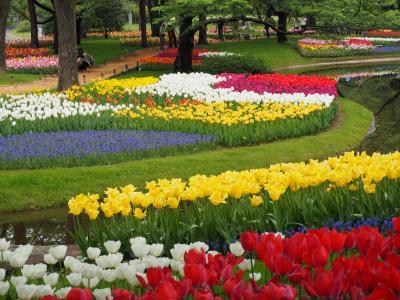 昭和記念公園のチューリップの競演 ピークは過ぎたものの遠目で見れば十分いけてました