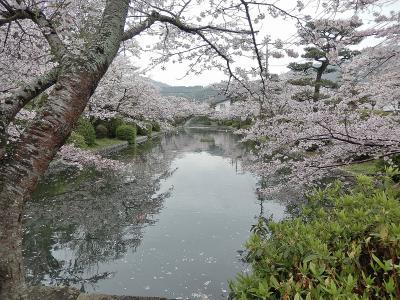 サクラ満開 春爛漫の山陽路 その3 岩国市(後半)