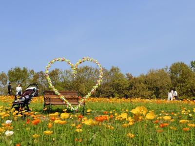 春の陽気に誘われて、大阪万博記念公園・自然文化園 「花の丘のポピー畑」をホロホロ散歩。(2018)