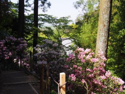 石楠花の綺麗な岡寺、本堂内々陣お扉特別開扉