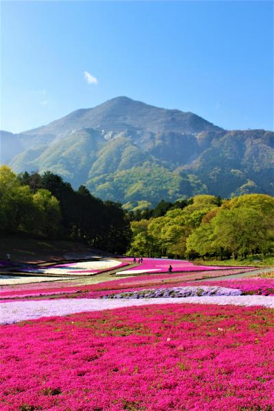 【2018年】しつこく行く芝桜の羊山公園とあけぼの子どもの森公園のムーミンの家(4月22日芝桜は満開です)