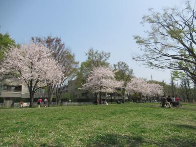 2018.3.29  今年の桜の満開は 世田谷の野川と仙川の桜