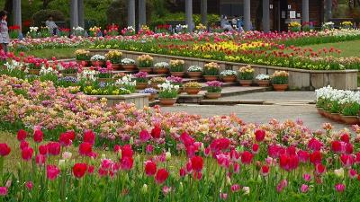 県立加西フラワーセンターのチューリップ祭りに行く(3) 四季の花壇の風景と花 上巻。