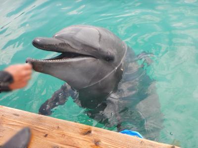 大満足の石垣島の旅(ダイビング、素潜り、ドルフィンスイム、小浜島、竹富島、石垣島観光)