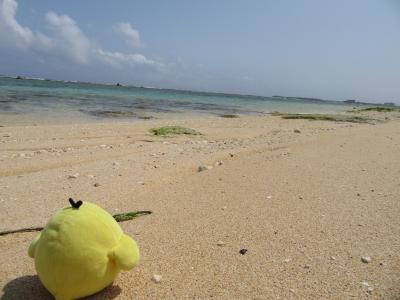 鹿児島県沖永良部島 を たびするトリ