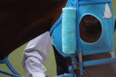 2018年4月14日 第20回中山グランドジャンプ(J・GⅠ)―日本競馬史上最強の障害馬オジュウチョウサンがまた勝った!(千葉県船橋市中山競馬場)