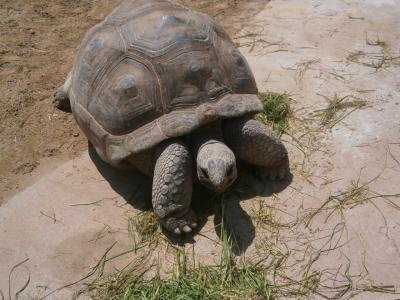 ひさしぶりの東山動物園