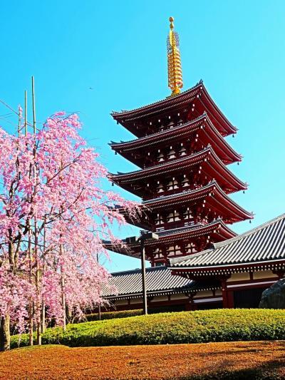 浅草1/2 金龍山浅草寺・その周辺 快晴爽快 ☆隅田公園に桜咲いて