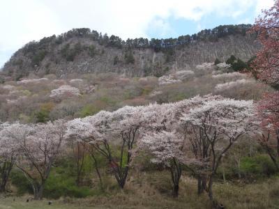 屏風岩公苑と住塚山と国見山と屏風山の桜めぐり