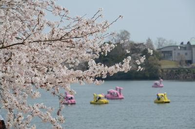 「さくら名所100選」を訪ねる花見ドライブ・その1<宇部市・ときわ公園>