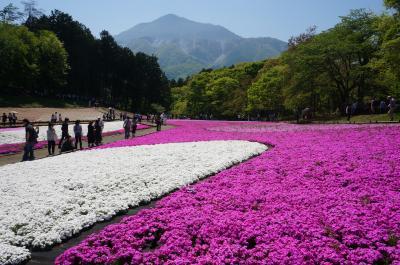 鮮やかな芝桜咲く秩父羊山公園と雪が残っている茶臼岳(那須岳)へ①