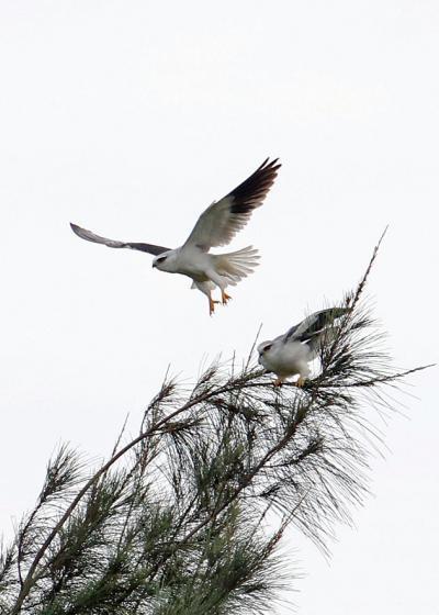 野鳥撮影記録・2018年4月石垣 パート1
