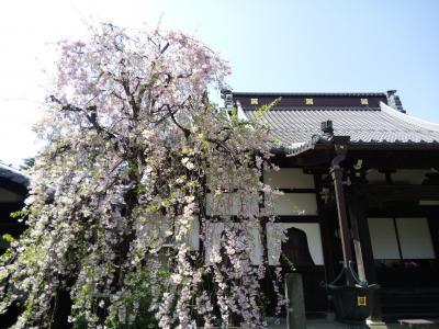 桜を見に行こう!境内に棲む獅子、鼻、白狐たちに遭遇 ~東高円寺お寺巡り~