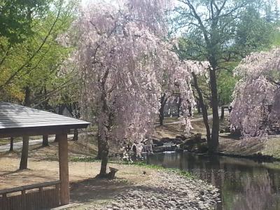 四季を通して楽しむ湯沢<春の芽吹き>編/Enjoying Echigo Yuzawa through a year <Sprauting in Spring>