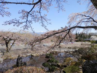 2018年 4月19日 光前寺の桜すばらしかった。