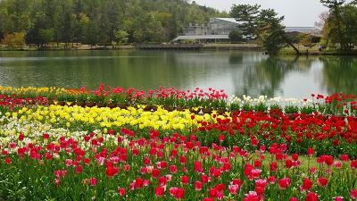 県立加西フラワーセンターのチューリップ祭りに行く(4) 四季の花壇の風景と花 下巻。