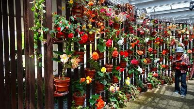 県立加西フラワーセンターのチューリップ祭りに行く(7) 大温室内の見学。