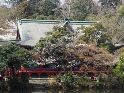井之頭財弁天 井之頭公園桜満開の時に再訪。白蛇伝説が興味深い。