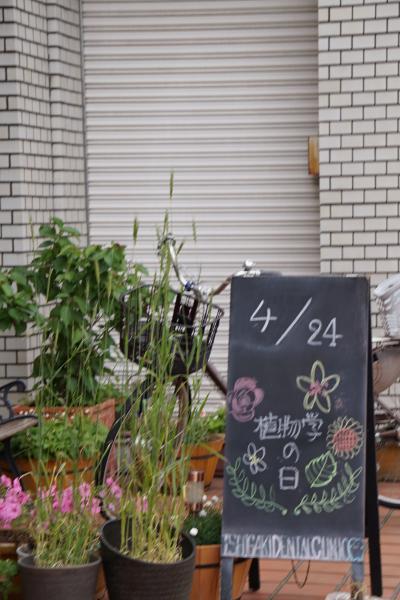 4/24植物学の日 植物中心で街歩き