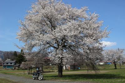 桜色のツーリング