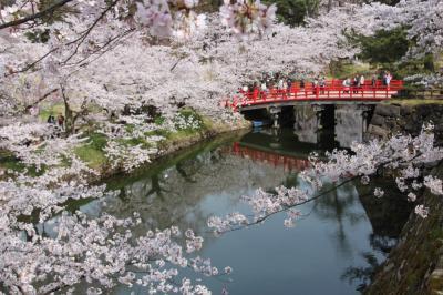 東北の桜(弘前公園、盛岡城址公園、北上展勝地、角館武家屋敷)