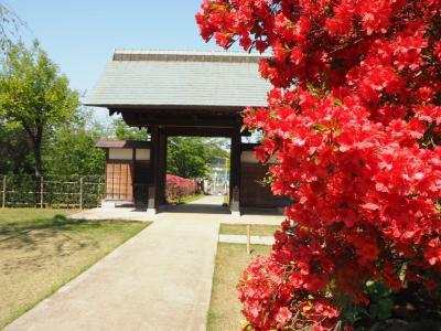 牡丹のお寺