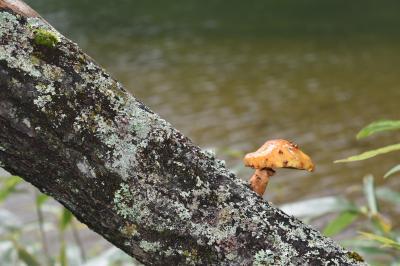 秋の戦場ヶ原をハイキング。きのこと苔に癒されて…
