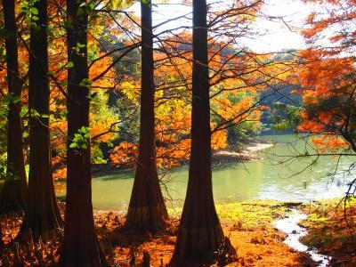 篠栗九大の森 幻想的な風景に心奪われる ラクウショウ