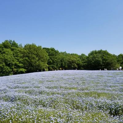 春の森林公園