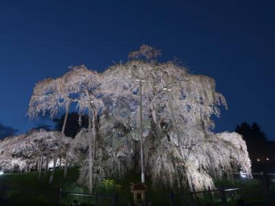 みなみ東北の桜を訪ねて3泊4日の旅 7-2 (三春の滝桜編)