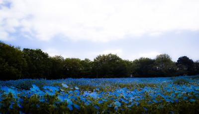 春がいっぱい!国営武蔵丘陵森林公園