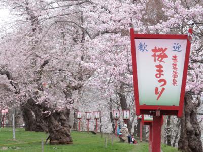 みなみ東北の桜を訪ねて3泊4日の旅 7-4 (松が岬公園、烏帽子山公園、霞城公園編)
