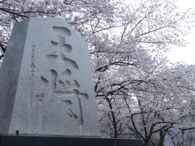 みなみ東北の桜を訪ねて3泊4日の旅 7-5 (天童編)