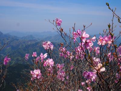 西上州の烏帽子岳 青空に映えるアカヤシオとパノラマ展望ハイク♪