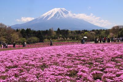 富士芝桜まつりと富士山周遊2018年4月