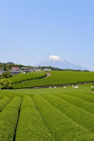 富士滞在 4~5月